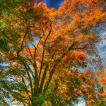 Autumn Borden Road Vertical copy