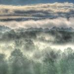 Gray Mist copy